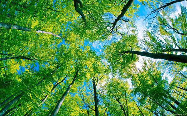 Copa de árboles